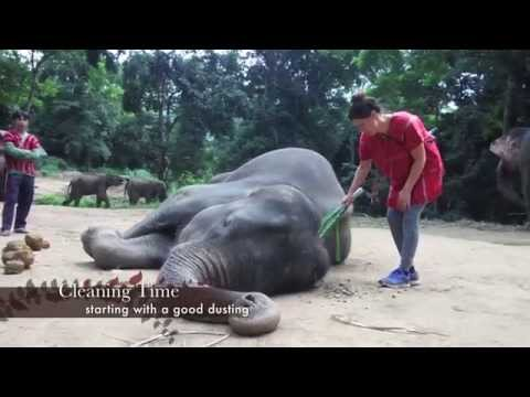 Patara Elephant Farm - Chiang Mai Thailand Shot with GoPro Black Hero3+