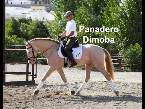 Panadero Dimoba (Publicado 29-9-2019)