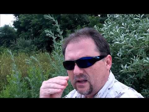 Sintomas at paggamot ng mga parasito sa katawan