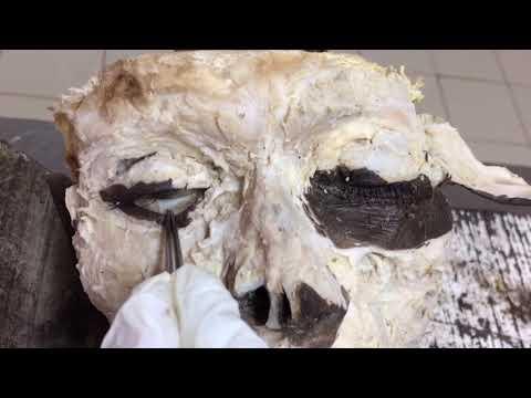 Pamamaraan ng pagbabagong-lakas mukha sa 45 taon