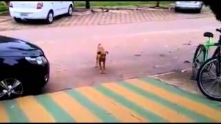 Những chú chó vui tính