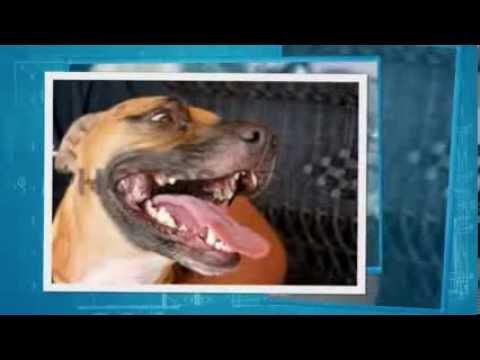 Video Symptoms Of Lyme Disease In Dogs