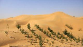 В Китае 67-летняя женщина намерена озеленить пустыню в память о сыне