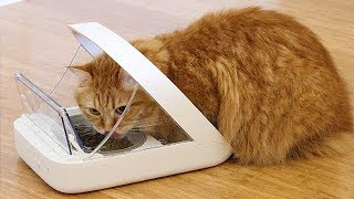 10 USEFUL GADGETS FOR PETS