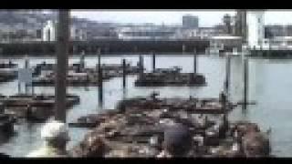 CSS (Cansei de Ser Sexy) Beautiful Song in San Francisco
