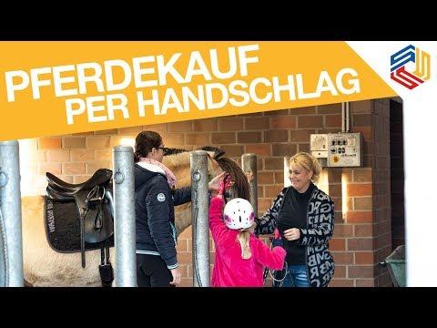 Vorsicht: Gewährleistung auch bei Privatverkauf, so verkauft ihr richtig! Pferderecht Delmenhorst