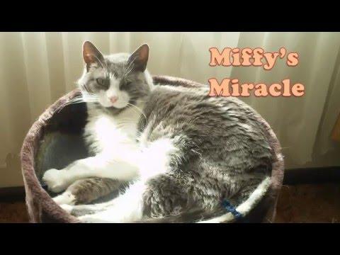 Video Cat Healed of Urinary Tract Blockage (UTI or FLUTD)