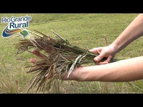 A importância de preservar os biomas