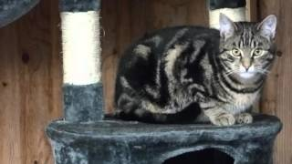 Katze Mimi – Katzenspiel am vierten Advent