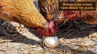 Как сделать чтобы ерш не клевали яйца