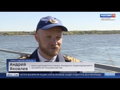 Охота на браконьеров. В Ленинградской области прошел День без сетей