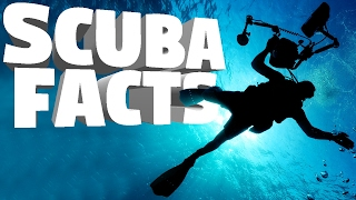 Interesting Facts You Never Knew About Scuba Diving