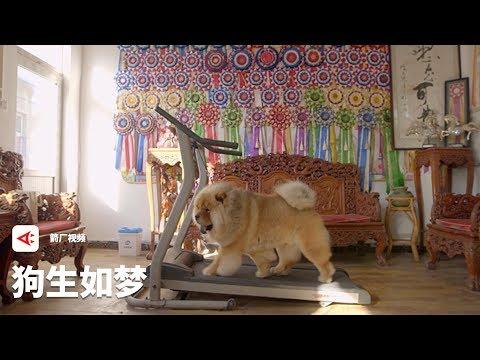 【箭厂视频】那些命运像极了人的狗的一生