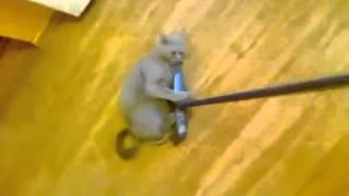 Кот со шваброй.