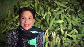"""VAMOS CON MAIZ, A LA MONTAÑA DE GUERRERO. En apoyo al programa, """"Para que llueva maíz en La Mon"""