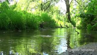 Ручей в лесу. Природа. Пение птиц. Звуки ручья. Слушать. Релакс. Медитация. Звуки природы.
