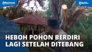 Heboh Video Pohon di Area Kuburan Berdiri Kembali seusai Ditebang dan Jadi Perdebatan Warganet