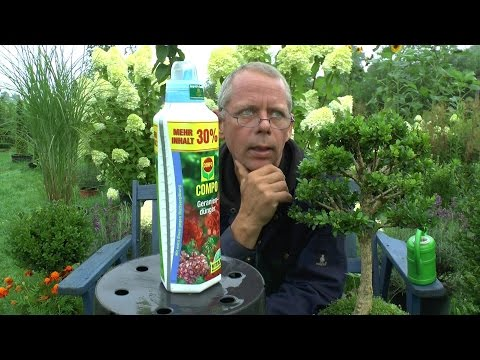 Düngen von Bonsai und Topfpflanzen Teil 1 Compo Geraniendünger