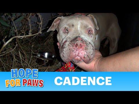 Bạn đi ngoài đường và gặp 1 con chó ghẻ, bạn có mang nó về chữa và nuôi nó như bạn là 1 người chủ không?