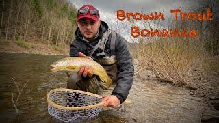 Spring Fly Fishing Pine Creek PA | Brown Trout Bonanza