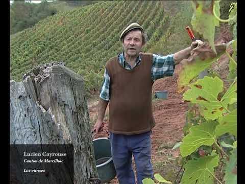 Los vimses per ligar la vinha