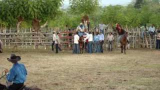 preview picture of video 'Rodeo  en Haiti Mejia de El seibo,Rep.Dominicana 8'