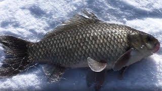 Рыбалка на амуре в мае 2020