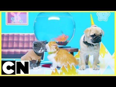 Cute Bloopers 🐱🐶  | Unikitty & The Amazing World of Gumball | Cartoon Network
