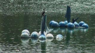 A pond in Bandra West, Mumbai