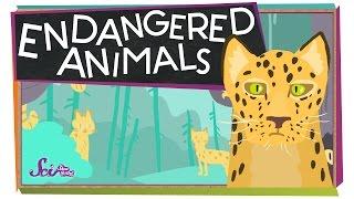 Endangered Animals!