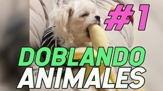 DOBLANDO ANIMALES MIX #1