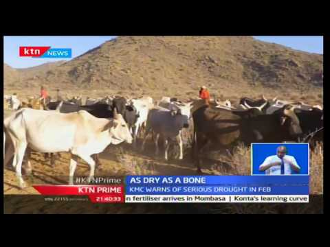 KTN Prime: Kenya Meat Commission intervenes to salvage dying cattle due biting drought