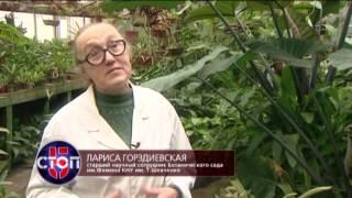 Комнатные цветы: какие растения опасны для жизни - СТОП 5, 22.01.2017