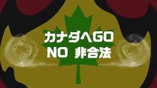 カナダへGO!! / JUMBO MAATCH