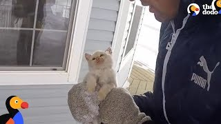 Kitten Frozen Solid Brought Back To Life by Family | The Dodo
