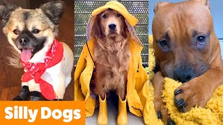 Silliest Cute Dogs | Funny Pet Videos