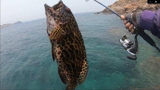 Câu Cá Biển | Câu Cá Mú, Mó cùng cảnh đẹp Hòn Sẹo - Nhơn Lý | fishing grouper