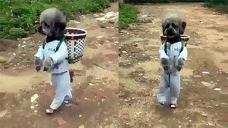 Anjing Unik Bisa Berjalan Seperti Manusia, Videonya Malah Dihujat Netizen, Kenapa Ya