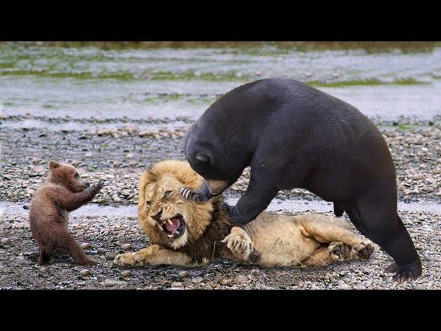 צפו ב-2 חיות רעבות שמנסות לטרוף אחת את השניה: