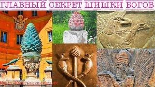 Главный секрет шишки богов
