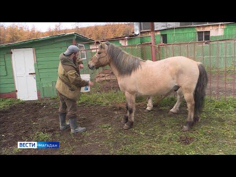 Британец отправится в кругосветку на лошадях якутской породы