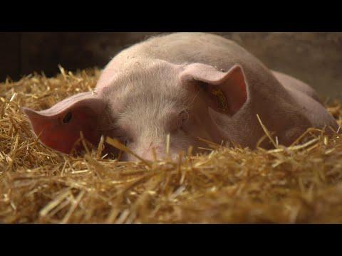 , title : 'Tierwohl durch Rohfasern im Schweinefutter