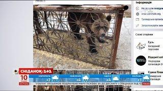 Чи захищає в Україні закон тварин