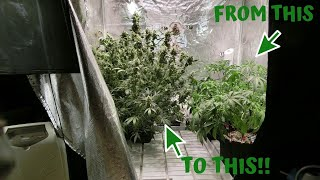 Training Autoflowers For Big Yields With Advanced Nutrients
