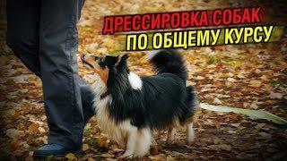 Дрессировка собак | Общий курс, базовые упражнения