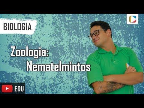 Enterobius vermicularis liecba