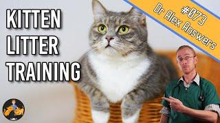 How To: Kitten Litter Training Tips - Train them FAST! - Cat Health Vet Advice