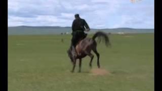 как монголы заезжают лошадей