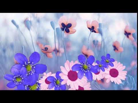 Футаж цветы полевые