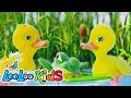 Download Video Five Little Ducks - THE BEST Songs for Children | LooLoo Kids